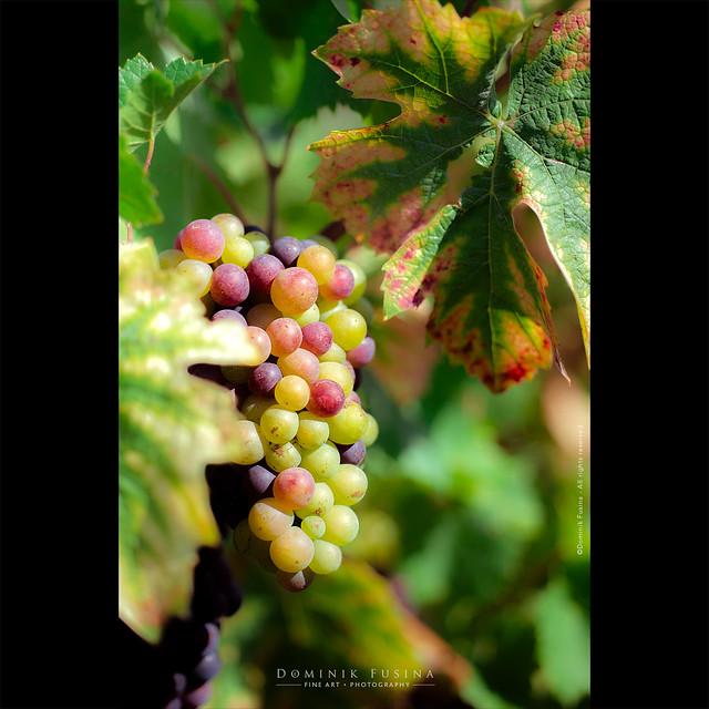 Multicolors of Beaujolais