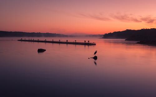 mist silhouette fog sunrise ks kansas egret milfordlake milfordlakestatepark