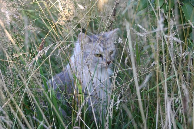 Fussel im hohen Gras