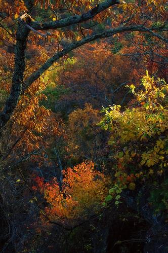 autumn fall blueridgeparkway