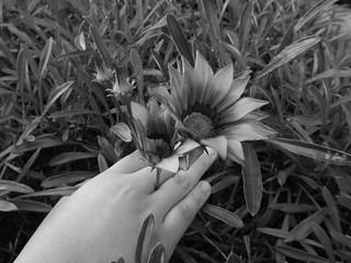 Tratame suavemente. | by C. Leonardo Chile