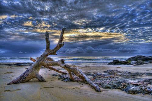 ocean camera sea sky colour beach clouds sunrise lens photography coast log sand aperture nikon rocks exposure flickr waves timber australia iso pacificocean newsouthwales colourful tasmansea coffsharbour urunga nikond90 raychristy hungryheads
