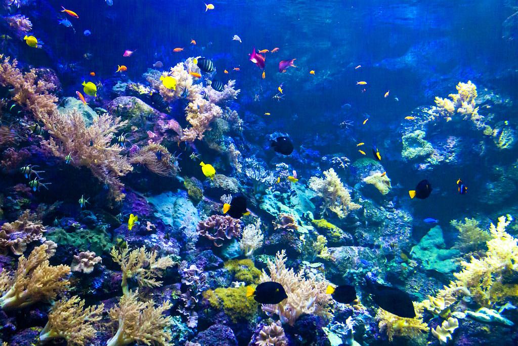 Resultado de imagen de Loro Parque  corales