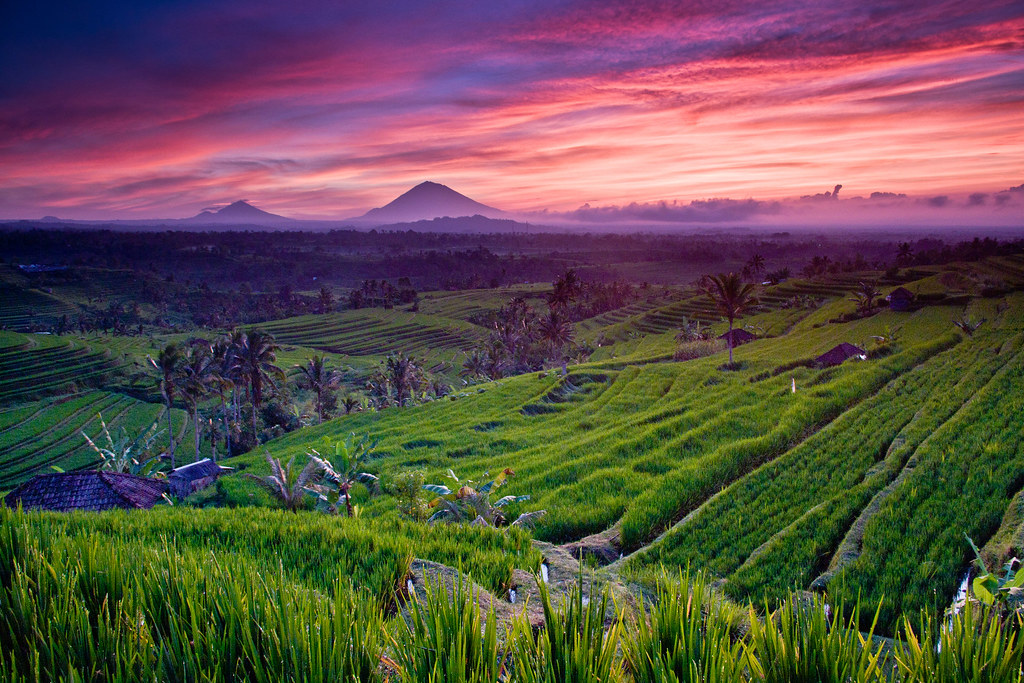Jatiluwih Rice Terrace Bali Today Morning 28th Oct I W Flickr