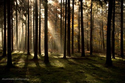 trees light forest rays raysoflight ommen arrien stegeren