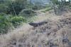 Komodo, foto: Gabriela Charvátová