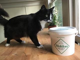 a @jonnydhunter sized bucket of salt  10lb cat for referen… | Flickr