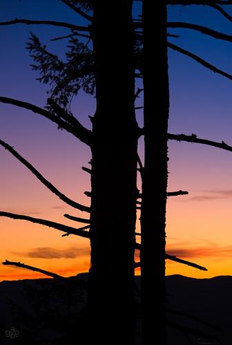 blue orange tree silhouette oregon purple unitedstates hillsboro fav10 chehalemmountains baldpeakstatescenicviewpoint