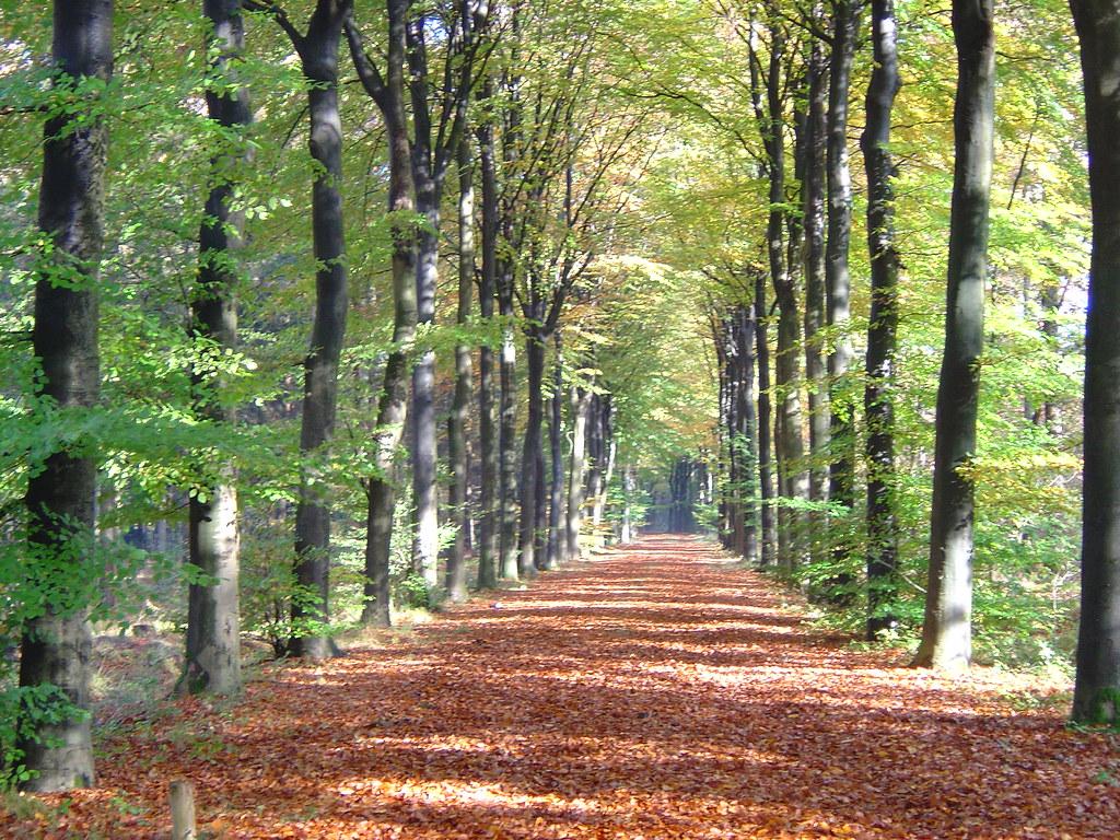 Herfstfoto Han De Kruyf Kievitweg 38 In Havelte Hdekruyf