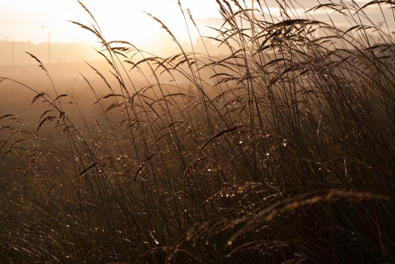 утро туманное, утро седое...  07:45:46  DSC_1542