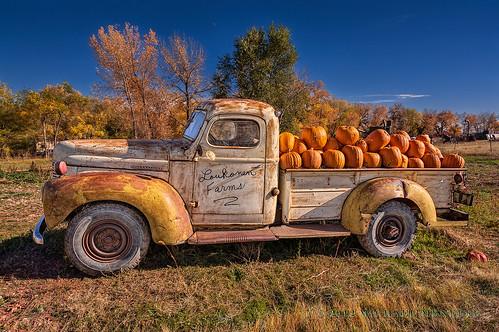 autumn orange holiday fall halloween nature rural pumpkin landscape nikon colorado holidays farm country farming boulder co pumpkinfarm internationalharvester clff d700 2012a loukonenfarms