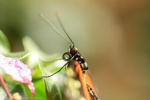 Butterfly Resting Macro