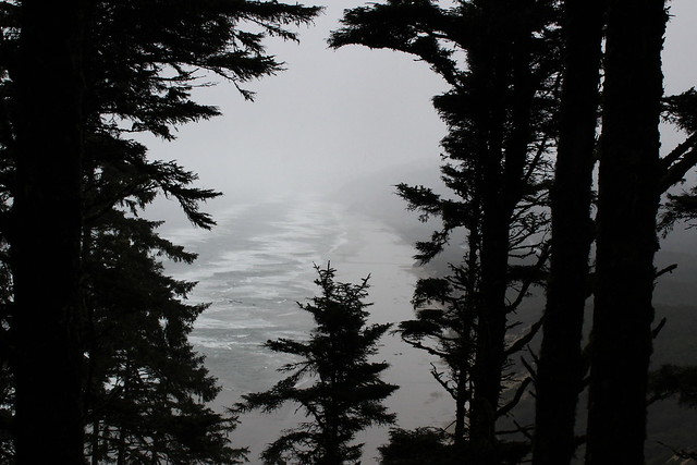 View, such as it was, from the top of Heceta Head