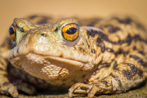 Toad   by ian-robinson