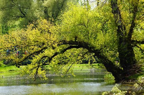 park kępapotocka warsaw warszawa poland polska city citypark capitalcity spring wiosna jurekp sonya77