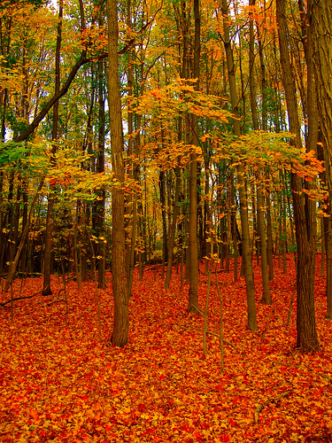 autumn trees newyork color tree art fall texture nature forest photoshop canon landscape photography photo interesting raw peace natural artistic earth picture peaceful calm serene jpg capture jpeg meditative cs4 adobecameraraw