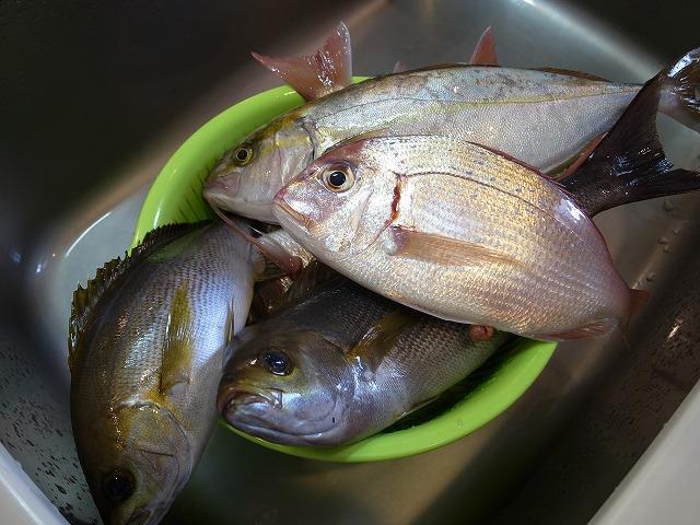 <p>b)船釣りはいつもの鯵より大物が釣れる!</p>