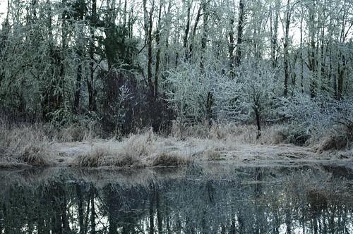 trees reflection nature sunrise pond beaver 365 deciduous day11 naturelandscape 9853 day11365 3652013 365the2013edition 11jan13