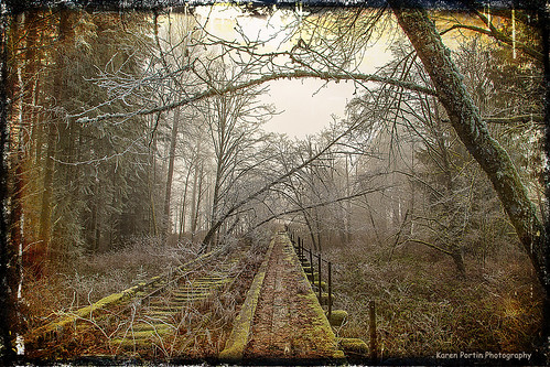 trestle trees texture abandoned fog frost mossy snoqualmievalley millpondroad lenabemanna