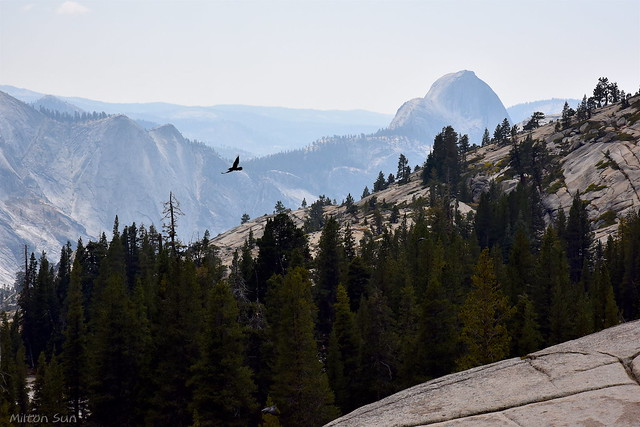 [Overlooking toward Half Dome from Olmsted Point]