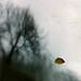 """Autumnal DNA"" by helmet13"