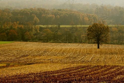 autumn mountains tree fall field fog wv lone plowed