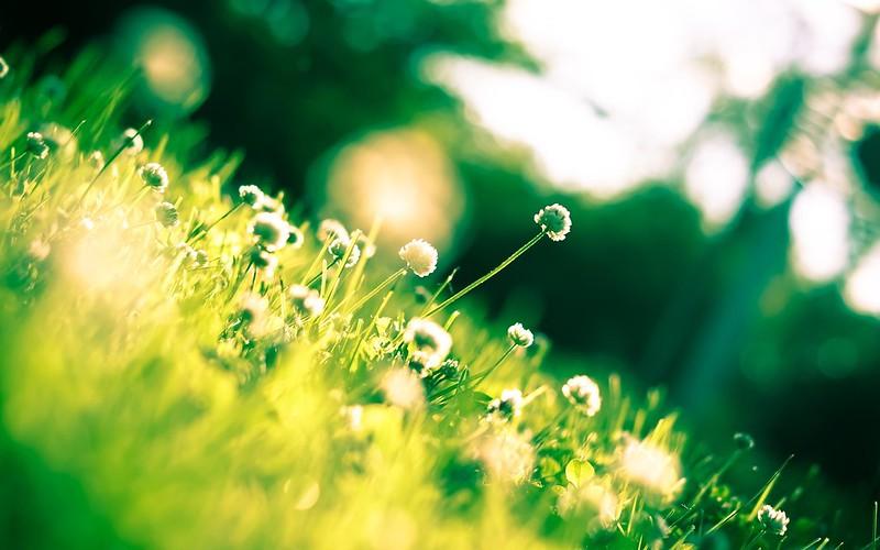 макро цветы