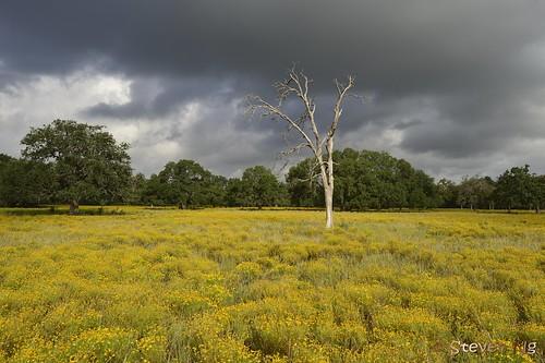 fallcolors deadtree roundrock texaswildflowers rainingcloud nikond800 nikon24mmpce nikoncapturenx2