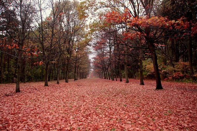 Autumn dream.