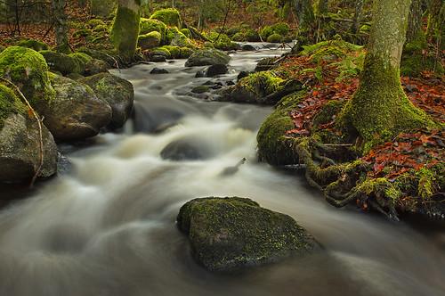 trees water leaves creek forest river moss woods stream sweden stones low halland mygearandme mygearandmepremium photographyforrecreation