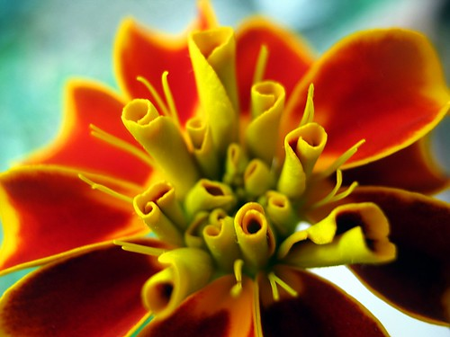 camera light red italy orange flower macro colors beautiful yellow composition contrast canon photography countryside focus soft view angle pov perspective gimp powershot september framing fiore tones lazio blooming tagetes demotivation 2011 a480 fleursetpaysages