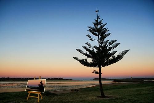 light lake tree silhouette pine last canvas pointofview lone alternate illawarra