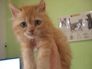 Kitty | by Rayya The Vet