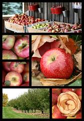 Apple Harvest 2012 Collage - © Patty Keigan