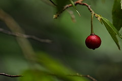 Tiny_Fruit