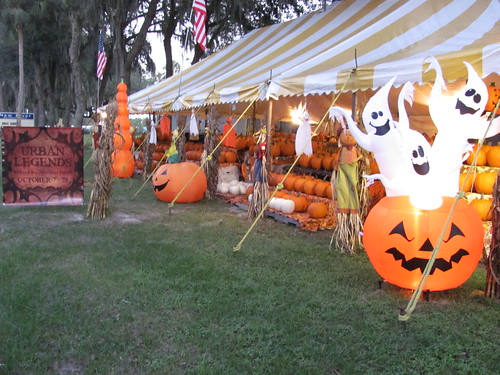 halloween pumpkin florida sale pumpkins tent patch