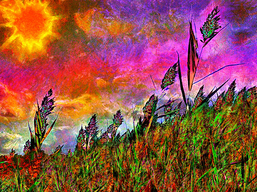 marh weed flower wild sunrise cloud color photoshop flickr google yahoo bing image montage getty stumbleupon facebook national geographic painting beautiful daum interesting creative surreal avant guarde pinterest tinder tumbler unique unusual fascinating art life outside