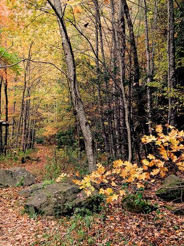 autumn trees forest woods hiking wilderness appalachianmountains awalkinthewoods pisgahnationalforest us276 iphoneopgraphy iphone4s shiningrockwildernesstrail