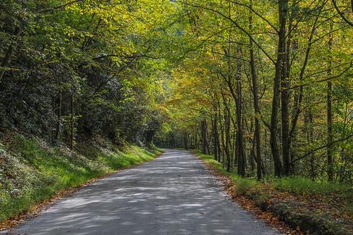 northcarolina wilsoncreek morganton pisgahnationalforest netbros internetbrothers brownmountainbeachroad