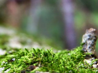 Moss | by Chris Sorge