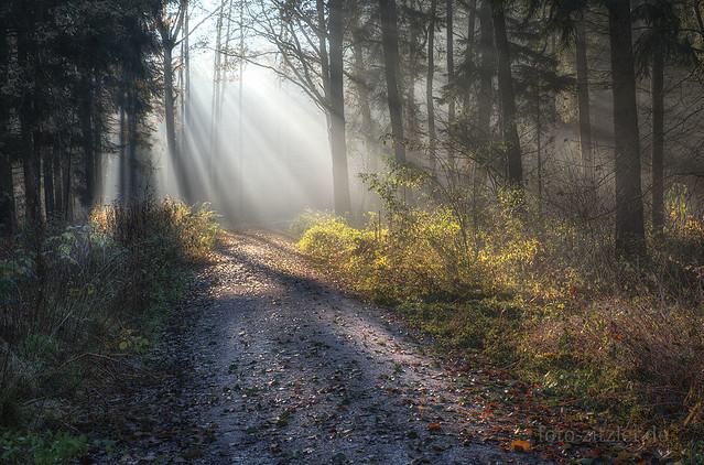well-lit trail