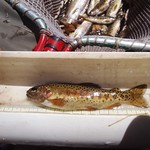 Hybridized Gila trout captured in McKenna Creek, NM by Dustin Myers