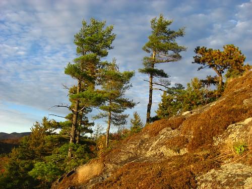 pine us nc highlands wnc lateday krummholz sunsetrock