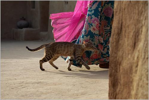 pink, nimb-ki-dhani | by nevil zaveri (thank you for 15+ million views:)