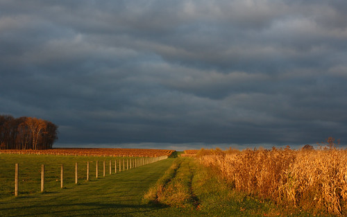 morning autumn fall field rural canon rebel dawn track cloudy country trail fenceposts xti