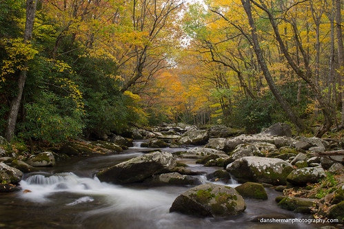 autumn trees color fall water leaves river nationalpark rocks fallcolor unitedstates tennessee gatlinburg smokymountains greatsmokymountains greatsmokymountainsnationalpark elkmont