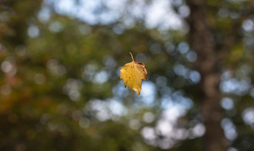 leaf | by Evelakes67