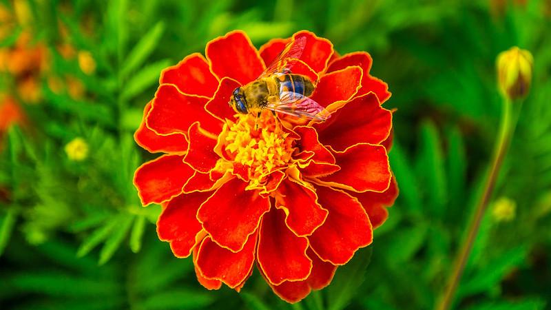 Цветок5