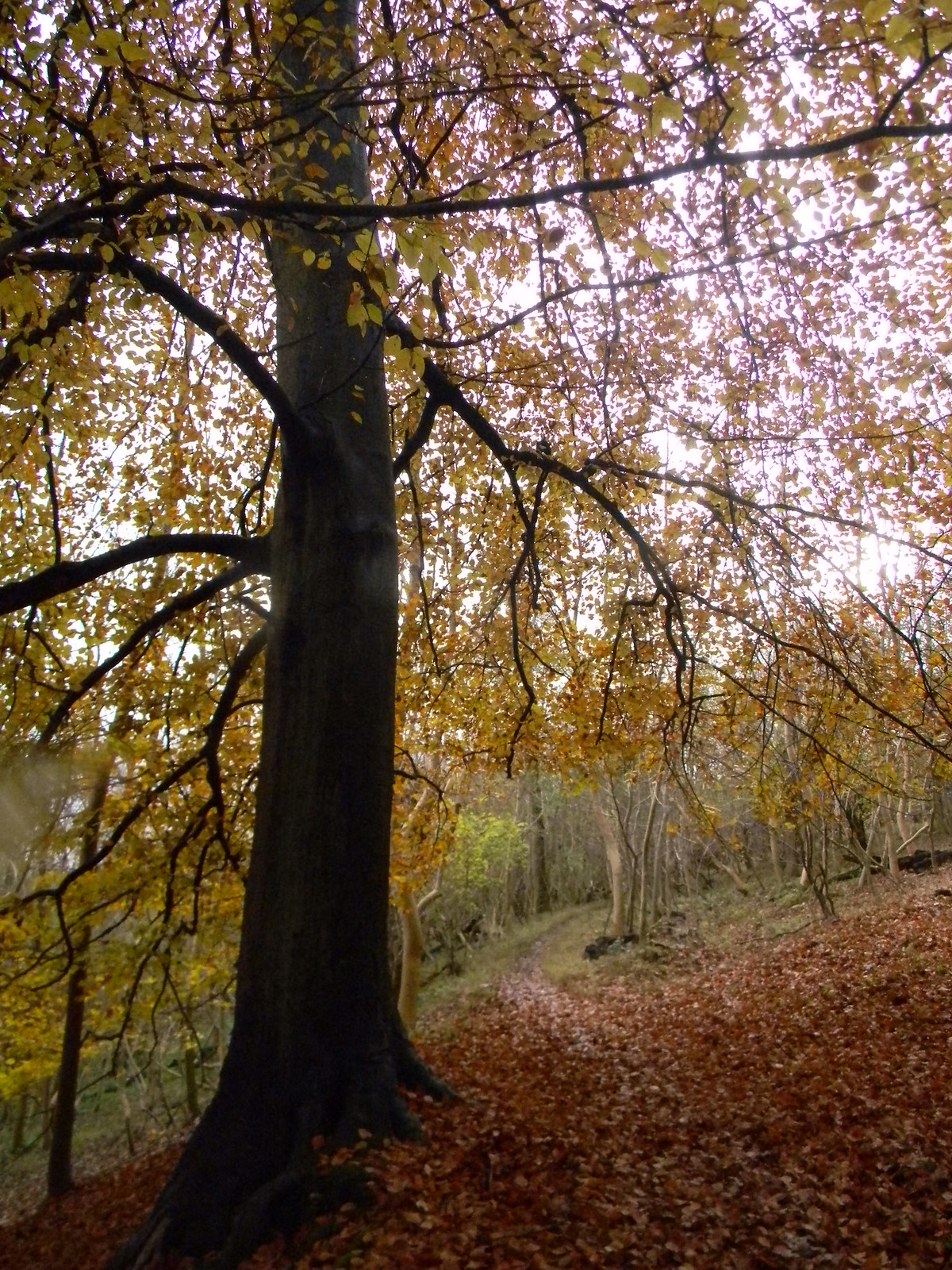 Burst of colour Henley Circlular via Hambleden (short) The hill before Hambleden
