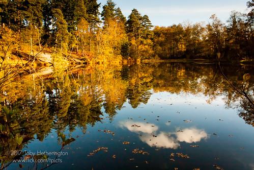 englefieldestate ovalpond uftoncourt uftonnervet autumn goldern lake leaf leaves orange reflections trees woodland woods reading england unitedkingdom weather